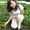 саженцы почтой в Краснодар, Ростов, Крым, Ставрополь, Астрахань, Адыгею   #745382