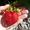 консультации по выращиванию клубники, виктории, садовой земляники,  без опыта работ #1326564