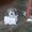 Коробки отбора мощности МП05,  МП58,  МП50 #1612376