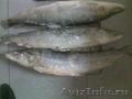 Предлагаю элитную деликатесную мороженую рыбу НЕЛЬМУ от 5 кг.