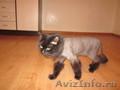 стрижка собак и кошек Fashion Animals
