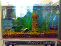 Продается аквариум 60 литров,  8 965 656 7458