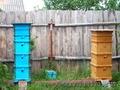 Продаются пчелы с ульями,  с.Охлебинино