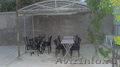 город курорт Евпатория-лето 2016. - Изображение #3, Объявление #529916