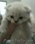Продаются шикарные котята